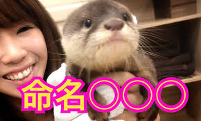 【急上昇】愛くるしいカワウソが大人気!あにまるずさんの動画が癒される!
